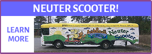 Neuter Scooter
