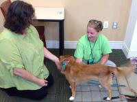 BARKS-Dog-and-staff