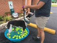 Dog Wash 2016 Image 1