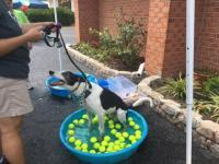 Dog Wash 2016 Image 2