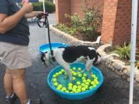 Dog Wash 2016 Image 3
