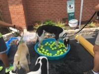 Dog Wash 2016 Image 4