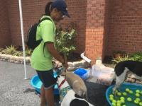 Dog Wash 2016 Image 5