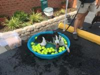 Dog Wash 2016 Image 9