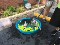 Dog Wash 2016 Image 10