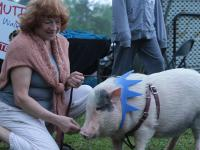 lady and pig
