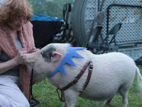 lady and pig 2